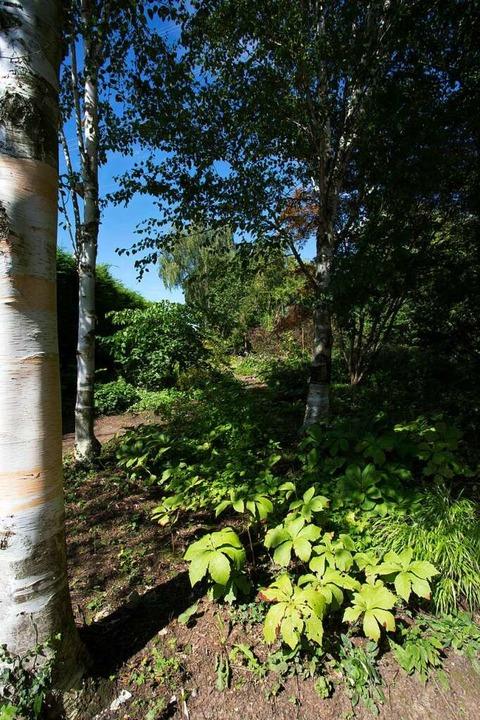 Der neu angelegte Birkenwald  | Foto: Regula Wolf