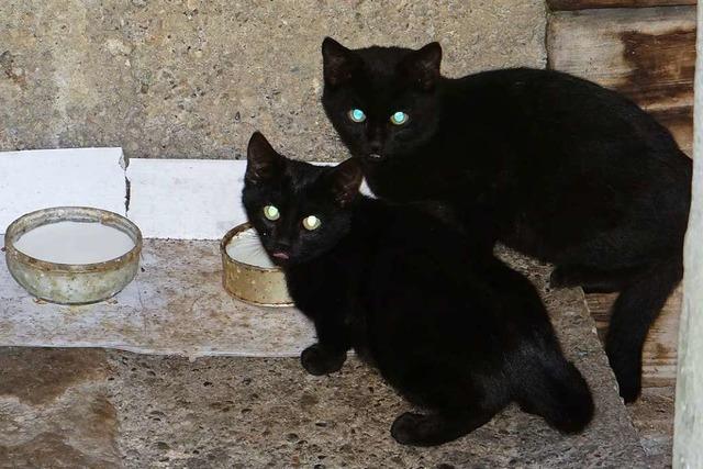 Buggingen denkt über die Einführung einer Katzenschutzverordnung nach