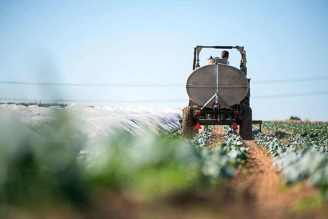 Trockenheit schadet Landwirten im Südwesten weniger als befürchtet