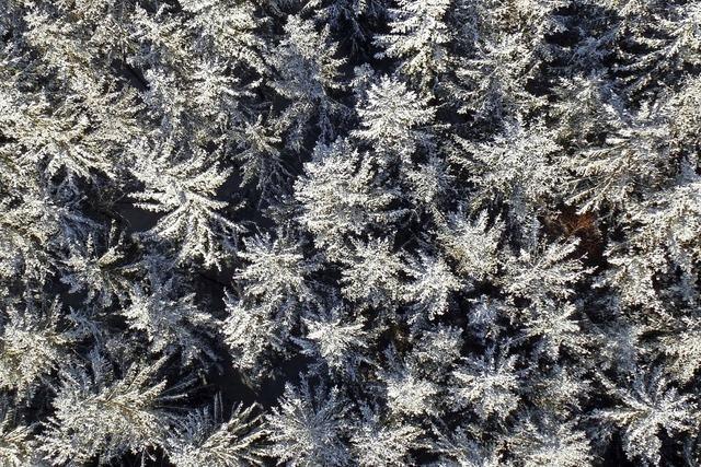 Schneebedeckte Wälder