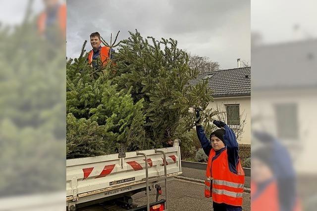 Keiner sammelt die Christbäume