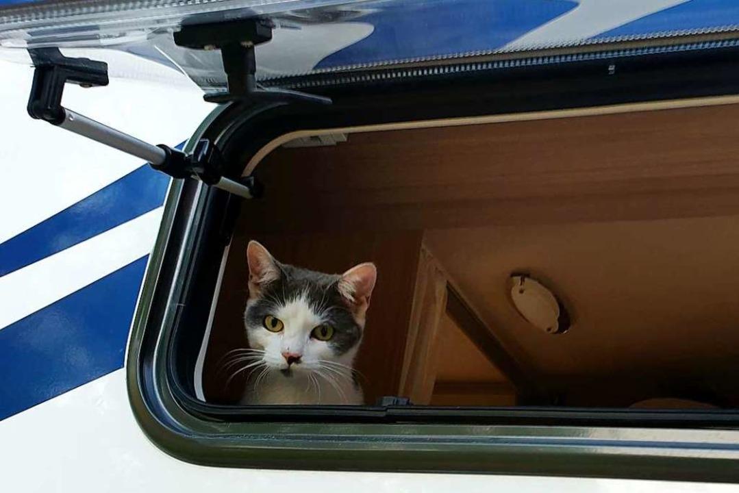 Da will sogar die Katze mit.    Foto: Alexander Dick