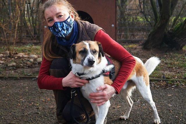 In der Pandemie wollen viele Offenburger ein Haustier adoptieren