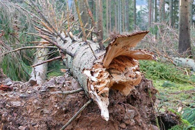 Winterstürme wie Burglind zwingen Forstwirtschaft zum Wandel