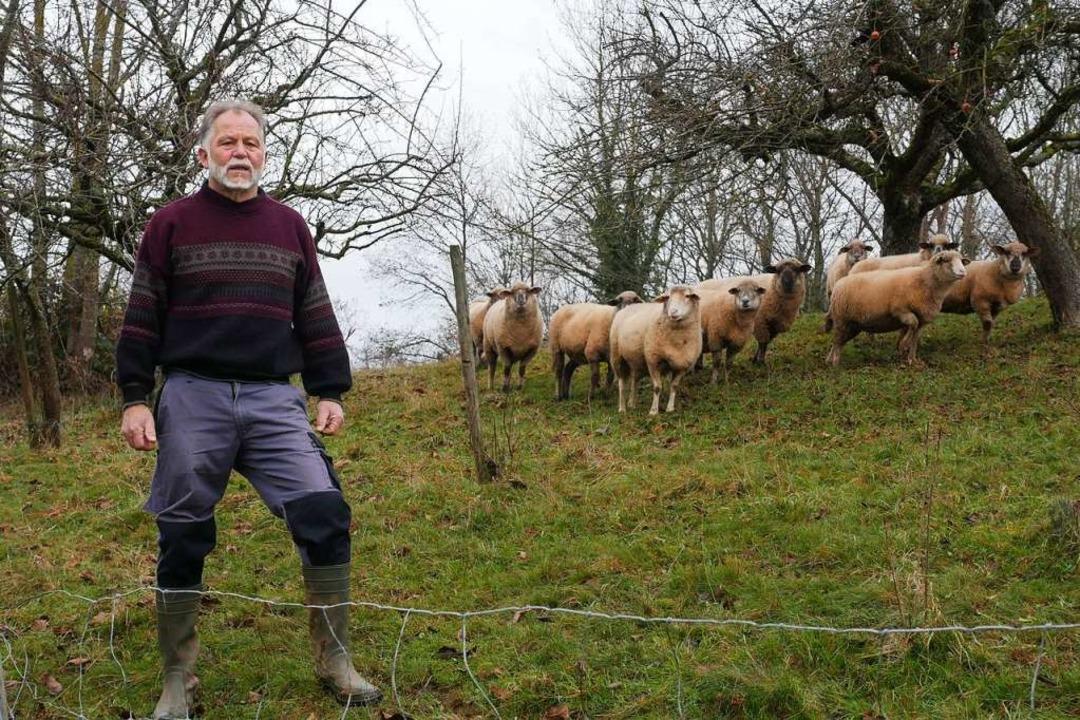 Einen Schreck bekam Franz Asal in Merz... Schafe von einem Wolf gerissen wurde.  | Foto: Jannik Jürgens