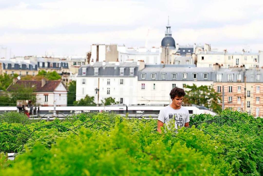 Urban Gardening in einem Pariser Voror...iffe in das bestehende Verkehrssystem.    Foto: BENJAMIN CREMEL