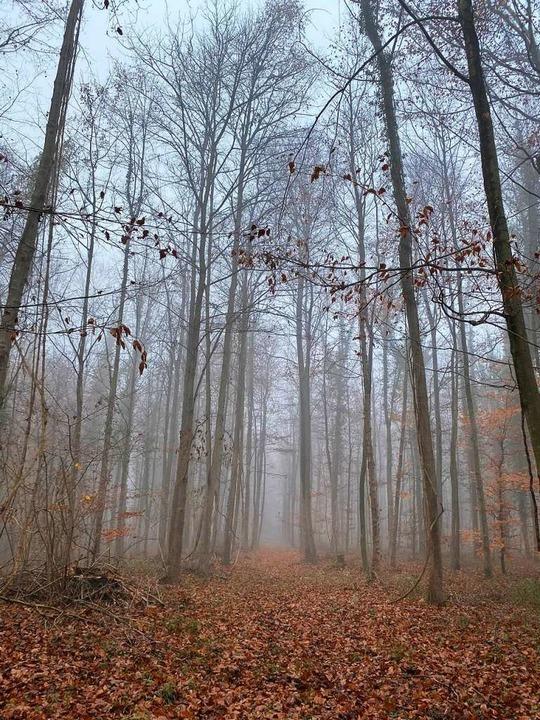 BZ-Leserin Michaela Breisacher hat die...s-Stimmung im Wyhler Wald eingefangen.  | Foto: Michaela Breisacher