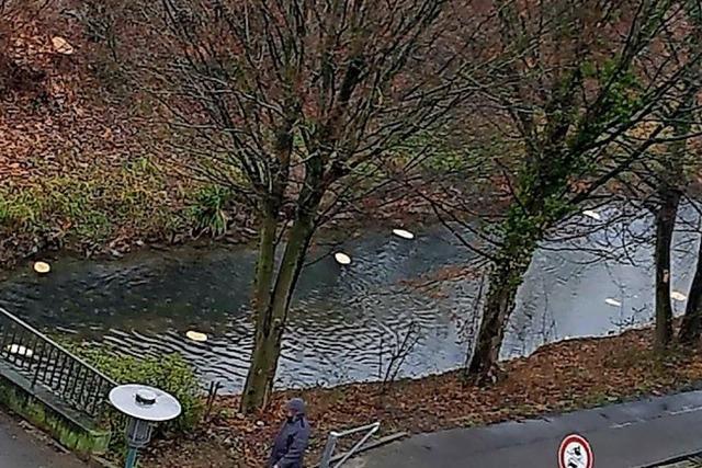 URTEILSPLATZ: Schwimmende Fladenbrote