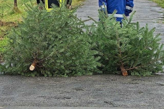 Wo in Lahr Weihnachtsbäume entsorgt werden können
