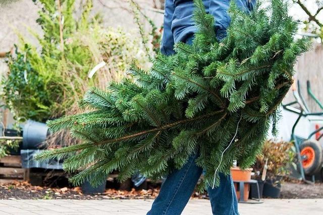 Freiburger Abfallwirtschaft sammelt Christbäume ein