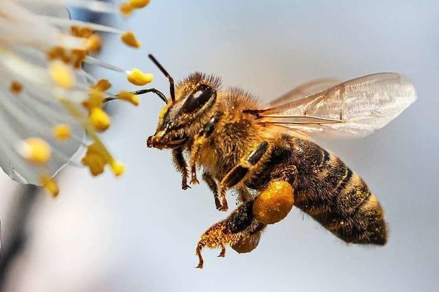 Bienenprodukte sind ein wahres Superfood