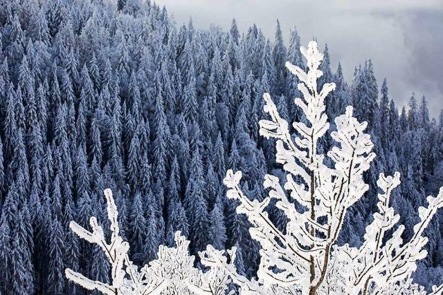 Schnee und Sturm in den Höhenlagen: Die Woche wird winterlich