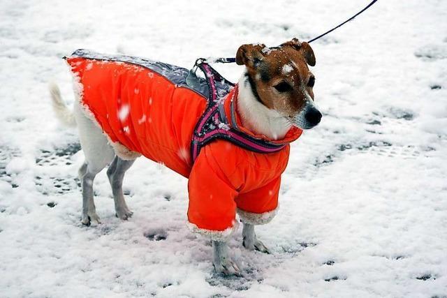 Zwei Lenzkircherinnen entwerfen funktionale Hundekleidung