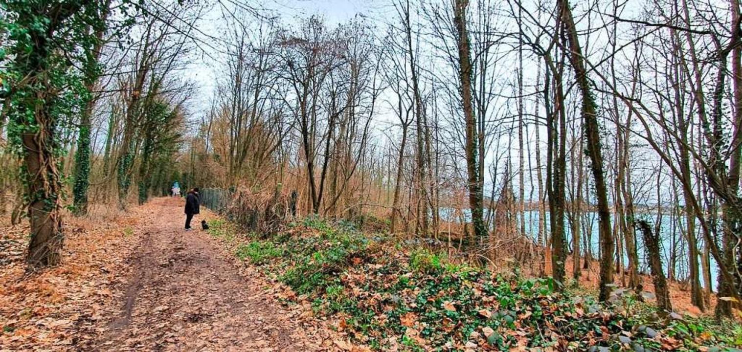 Die Waldwege rund um den Rimsinger Bag...onaten von Lastwagen  befahren werden.  | Foto: Julius Wilhelm Steckmeister