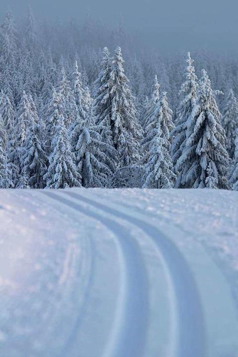 Perfekte Langlauf-Bedingungen finden S...or. Von dort geht es bis zum Feldberg.  | Foto: Alexander Koch