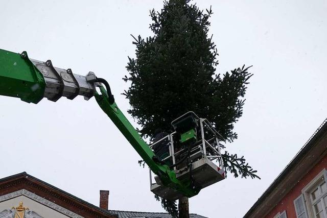 Schopfheimer Narren machen aus dem Weihnachtsbaum einen Fasnachtsbaum