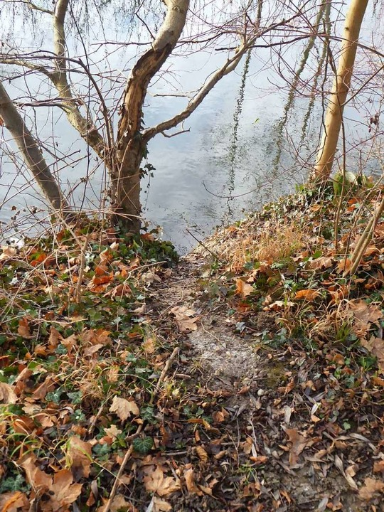 Dass der Biber regelmäßig zwischen  Mü...öschung zwischen den beiden Gewässern.  | Foto: Manfred Frietsch