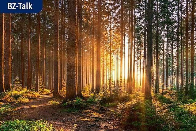 BZ-Talk: Wie die Waldwirtschaft der Zukunft aussehen kann