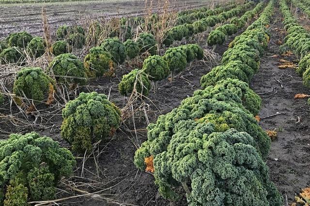 Öko-Regeln für die Landwirtschaft