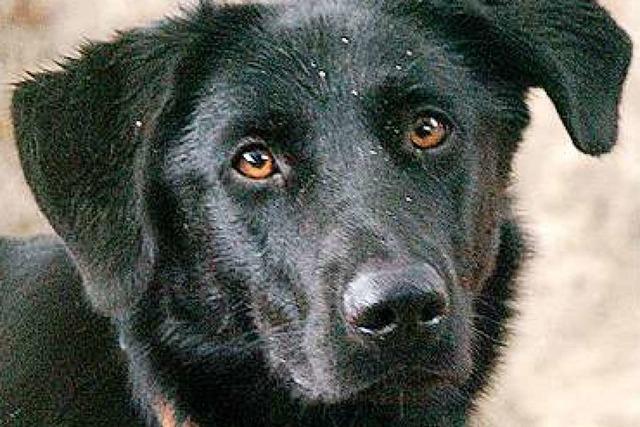 Polizei Offenburg ermittelt wegen eines mutmaßlich vergifteten Hundes