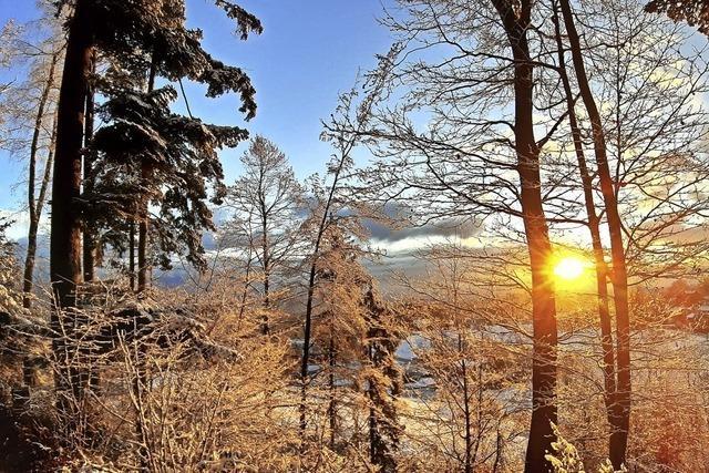 Winterimpressionen aus dem Wiesental