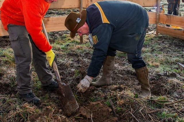 Projekt Wilde Waldweiden wartet mit drei erfolgreiche Aktionen auf