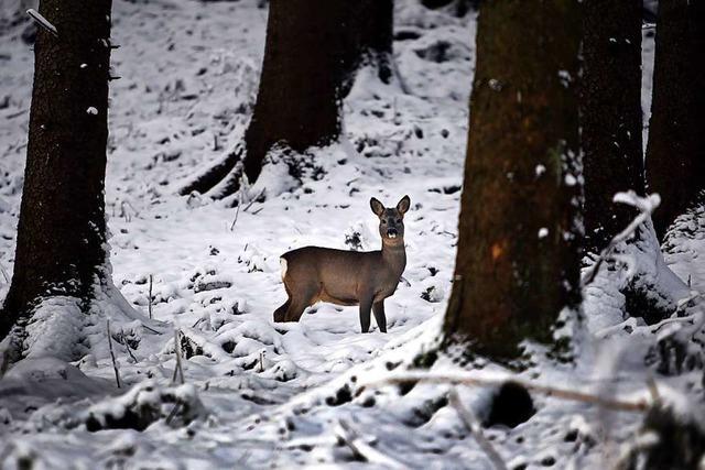 Die Jäger im Landkreis Lörrach sind um die Ruhe für Rehe besorgt