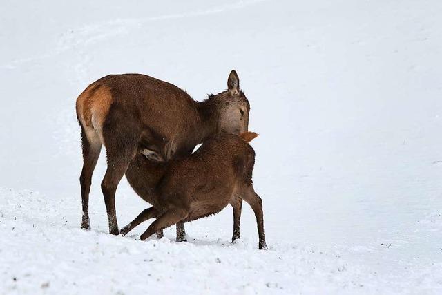 Wintersportler und Ausflügler dringen ins Revier der Wildtiere ein