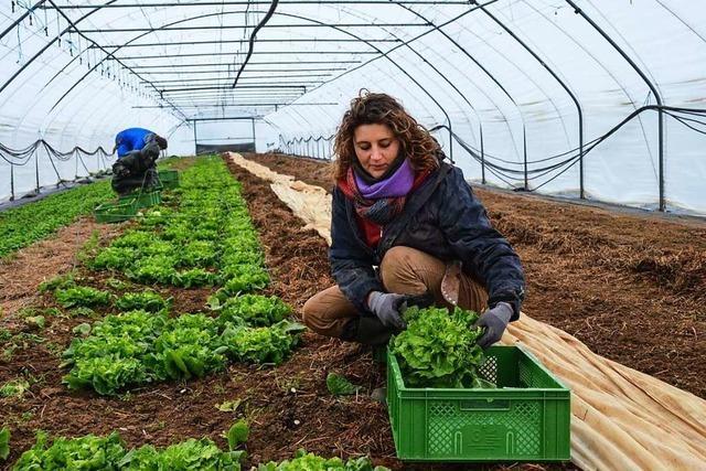 Freiburger Kooperative praktiziert solidarische Landwirtschaft