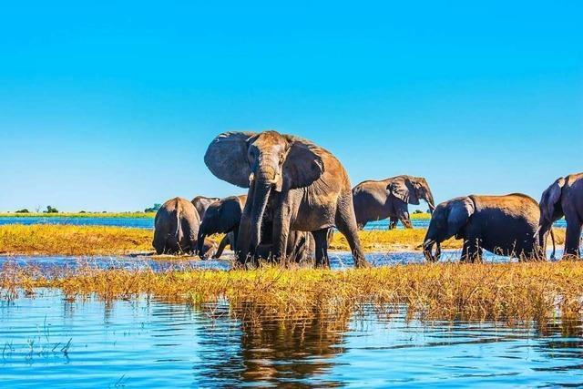 Ein Ölfund bringt das Naturerbe von Botswana in Gefahr