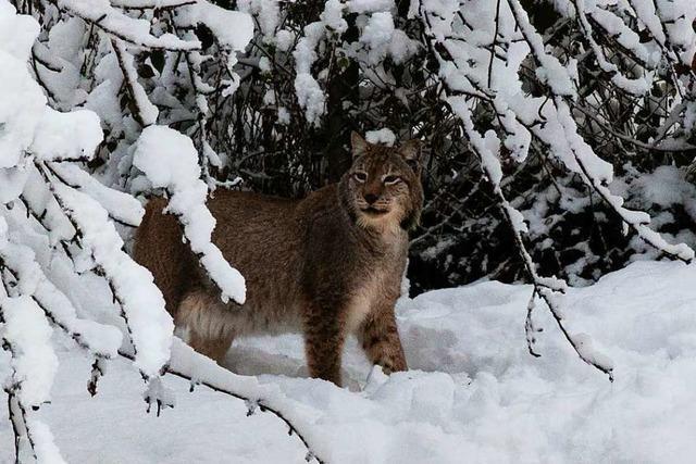 Nicht jedes Tier im Schwarzwaldzoo genießt den Schnee