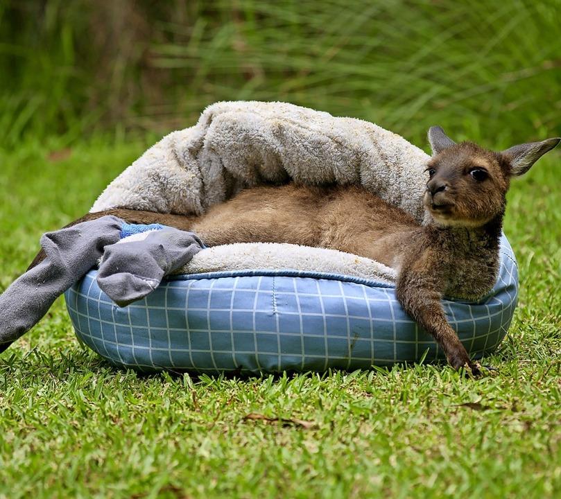 | Foto: Australian Reptile Park (dpa)