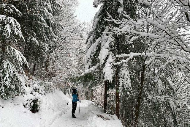 Im Schwarzwald droht Schneebruch