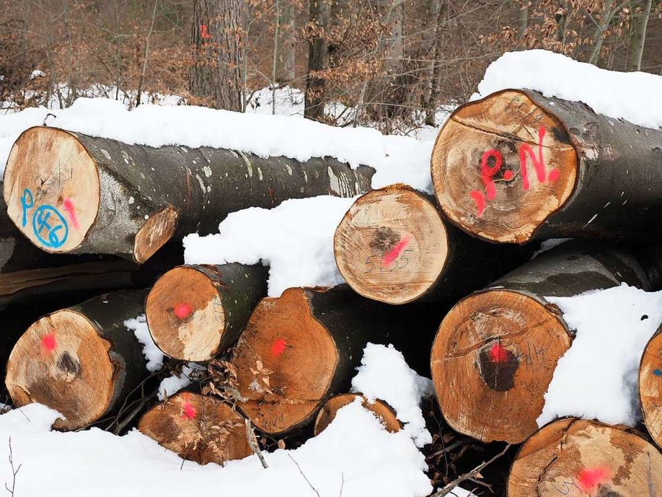 Holzeinschlag im Malterdinger Wald im Revier von Förster Bernhard Schultis    Foto: Michael Haberer