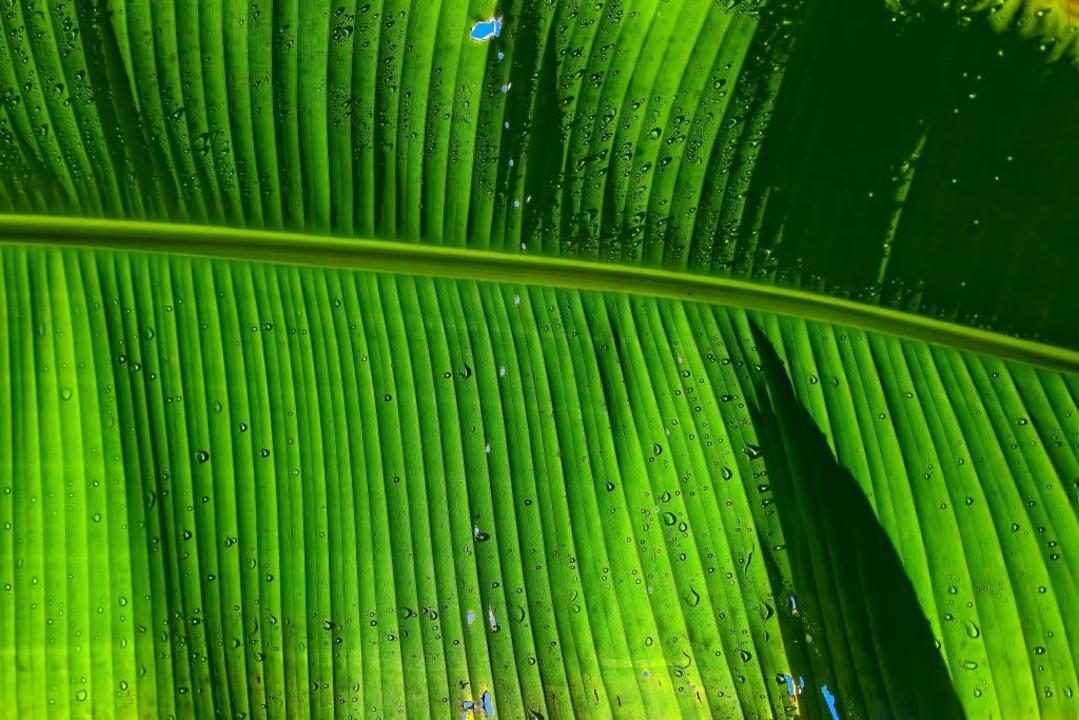 Grüner werden in 2021? Mit den fudder-Tipps klappt's bestimmt!  | Foto: Ricardo Gomez Angel (unsplash.com)