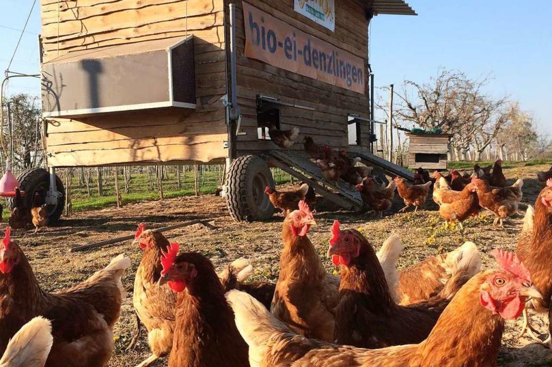 Ettenheim bekommt einen mobilen Hühnerstall.  | Foto: Johanna Schüßler