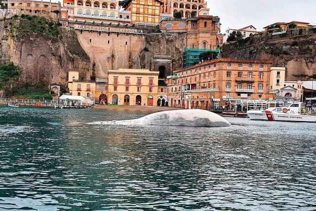 Toter Riesenwal vor Sorrento gibt Rätsel auf