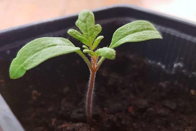 fudders Pflanzenwoche: Wie stelle ich natürlichen Dünger selbst her?