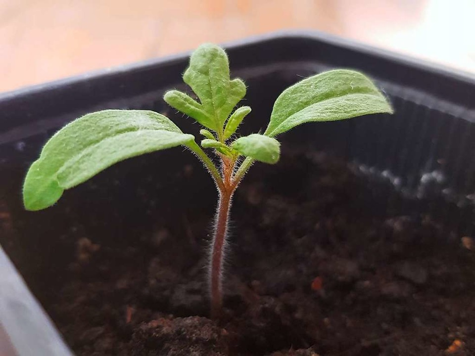 Gesund wachsen, gesund bleiben: Dafür braucht eine Pflanze Nährstoffe.  | Foto: Claudie Förster Ribet