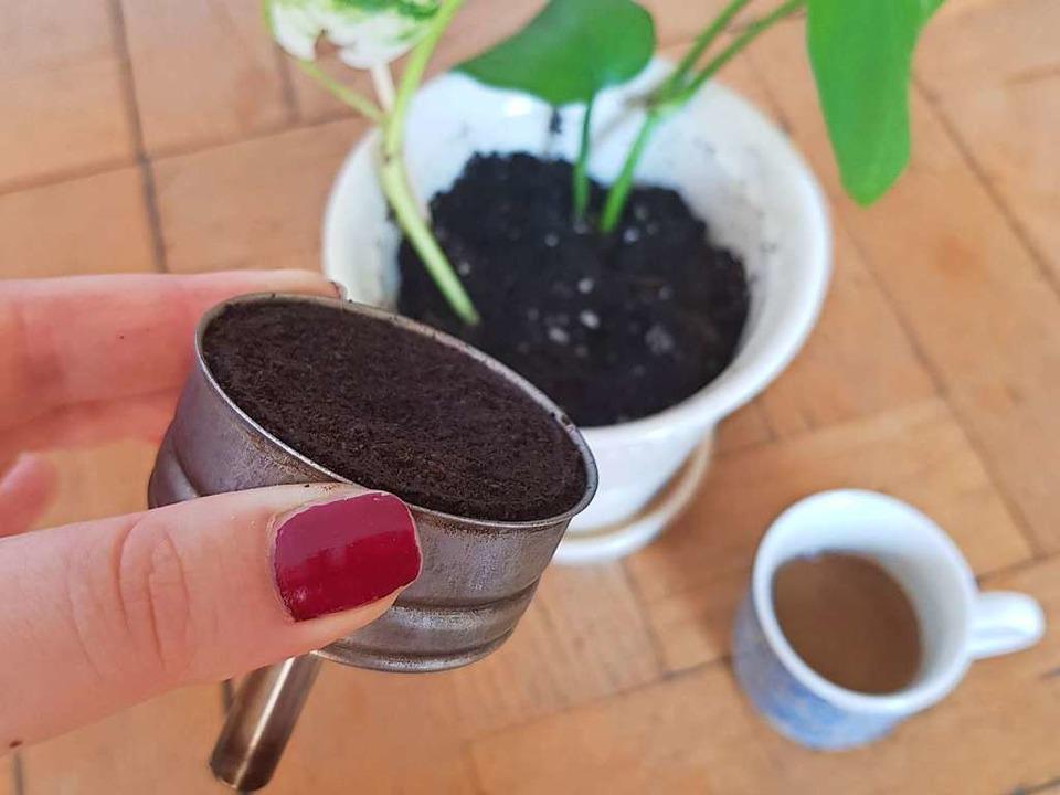Je nach Bedürfnis der Pflanze eignen s...edene Dünger. Zum Beispiel Kaffeesatz.  | Foto: Claudia Förster Ribet