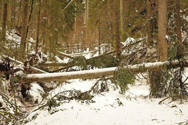 Schneebruchschäden in den Wäldern
