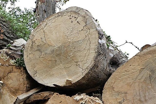 Künftiges Ziel sind stabile Baumarten