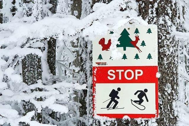 Querfeldeinwanderer stören die Ruhe der Wildtiere auf Schwarzwaldhöhen