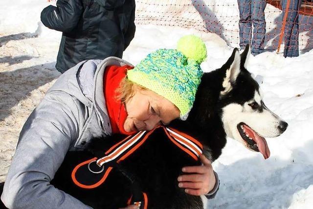 Zuschauer dürfen nicht zum Schlittenhunderennen in Todtmoos