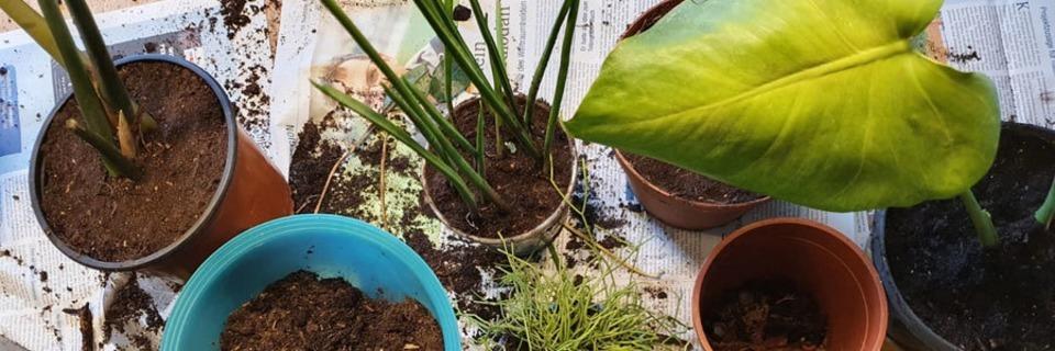 fudders Pflanzenwoche: Wann und wie topfe ich Zimmerpflanzen um?