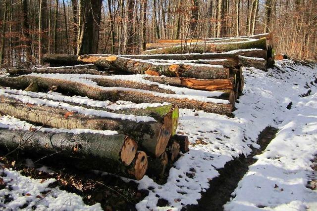 Holzversteigerungen haben für den Förster einige Vorteile