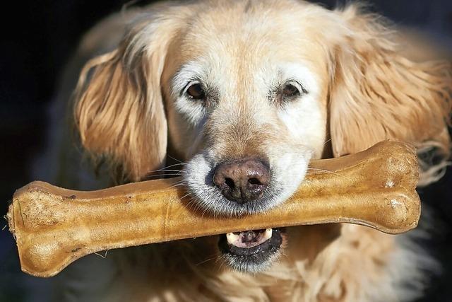 Noch immer ist die Nachfrage nach Haustieren im Tierheim Lörrach hoch
