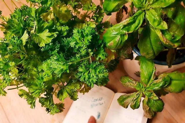 fudders Pflanzenwoche: Wann pflanze ich was?