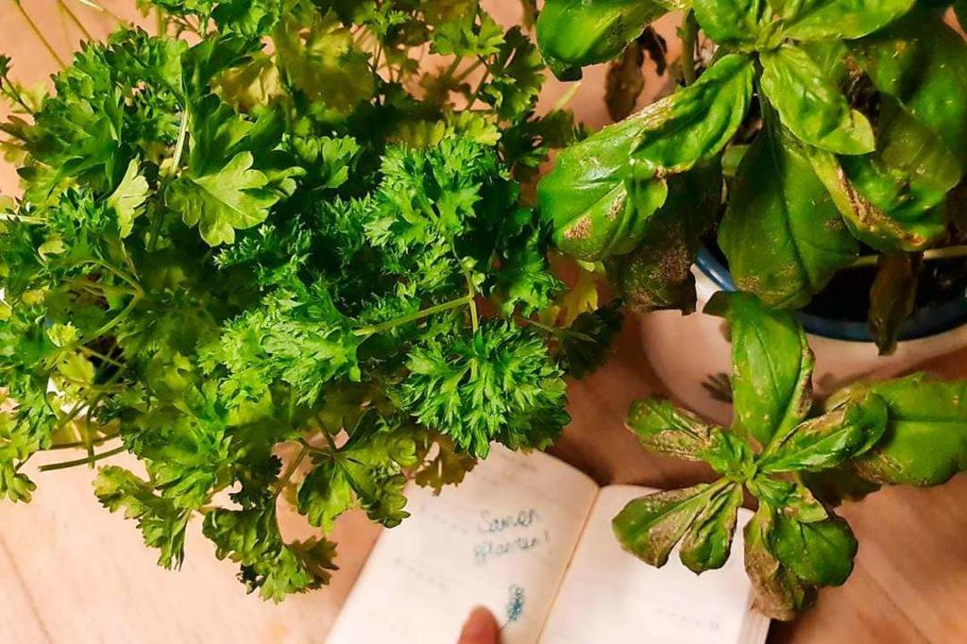 Im siebten Teil der Pflanzenserie lernen wir, wann wir Pflanzen richtig ansähen.    Foto: Claudia Förster Ribet