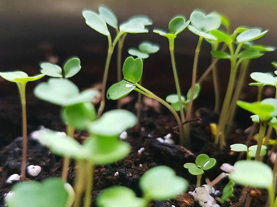 Es hängt von vielen Faktoren ab, ob die Samen keimen.    Foto: Claudia Förster Ribet